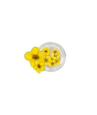 Flori naturale galbene