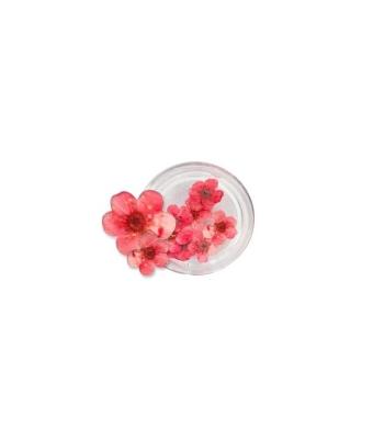 Flori naturale rosu